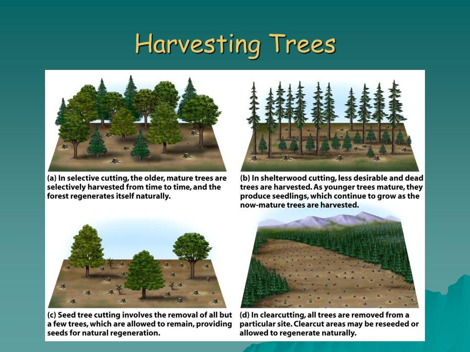 Harvesting Trees