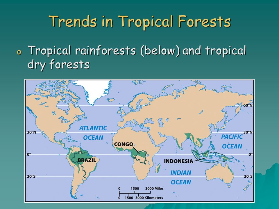 Trends in Tropical Forests o Tropical rainforests (below) and tropical dry forests
