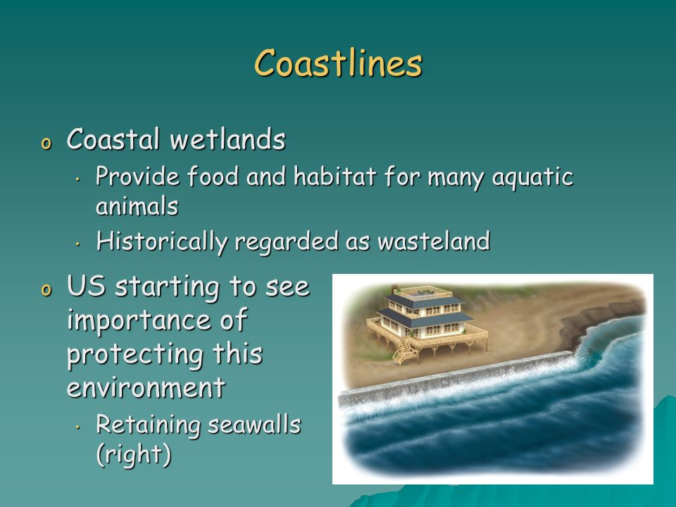Coastlines o Coastal wetlands Provide food and habitat for many aquatic animals Provide food and habitat for many aquatic animals Historically regarde