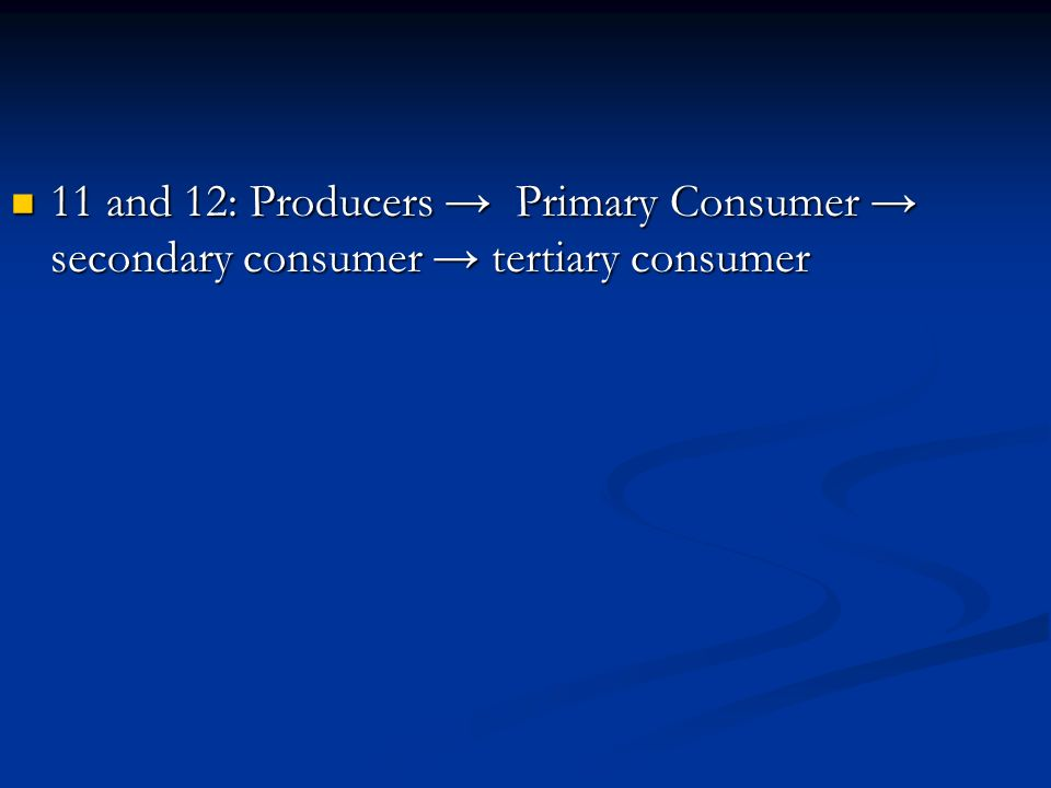 11 and 12: Producers Primary Consumer secondary consumer tertiary consumer 11 and 12: Producers Primary Consumer secondary consumer tertiary consumer