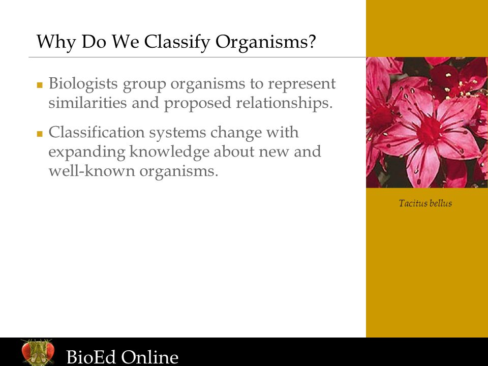 www.BioEdOnline.org Why Do We Classify Organisms? Biologists group organisms to represent similarities and proposed relationships. Classification syst