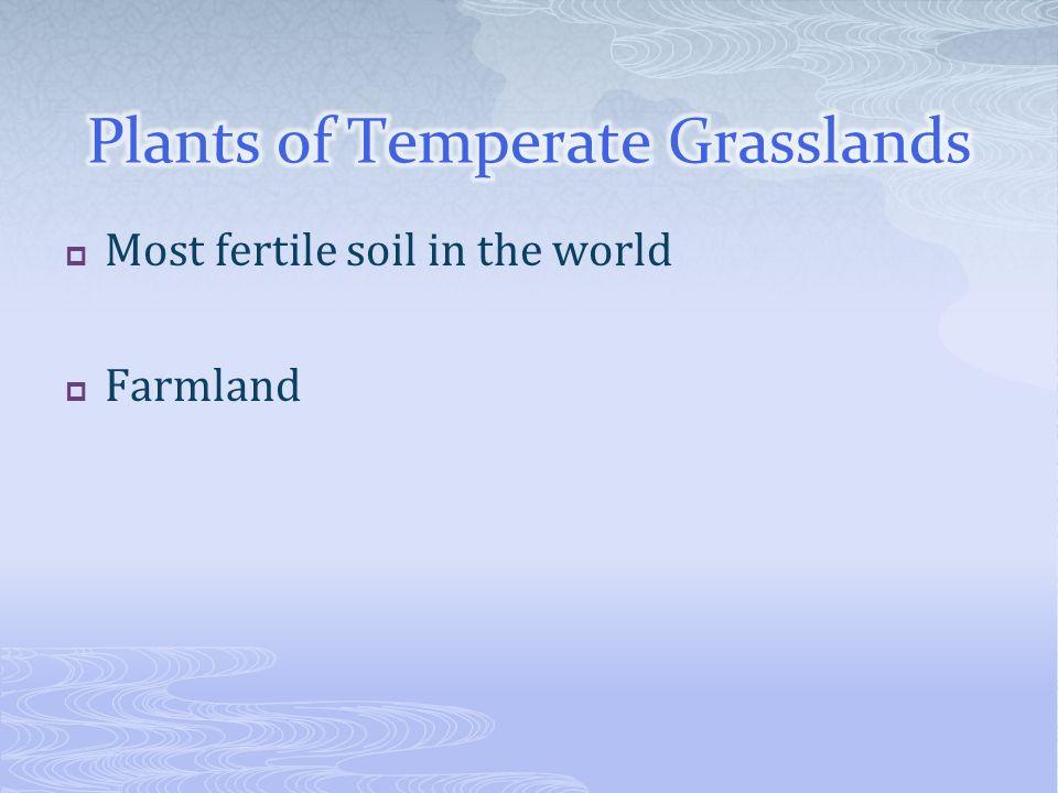 Most fertile soil in the world Farmland