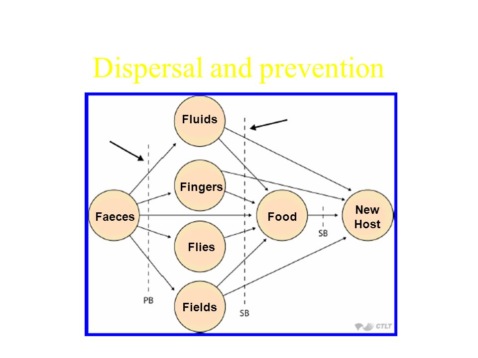 Dispersal and prevention Fluids Fields Faeces Fingers Flies Food New Host