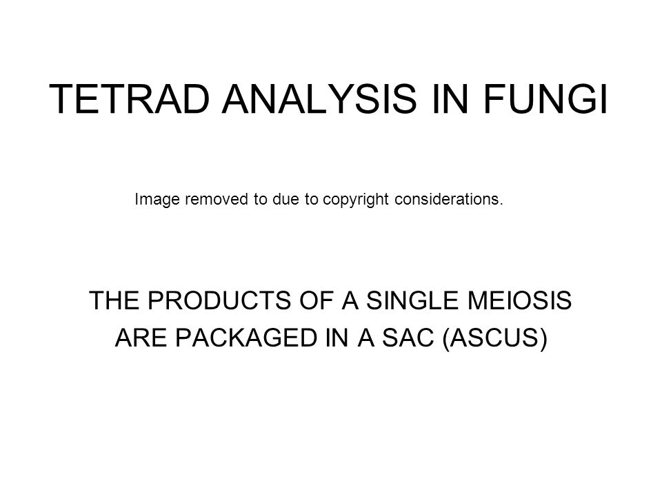 TETRAD ANALYSIS IN FUNGI THE PRODUCTS OF A SINGLE MEIOSIS ARE PACKAGED IN A SAC (ASCUS) Image removed to due to copyright considerations.