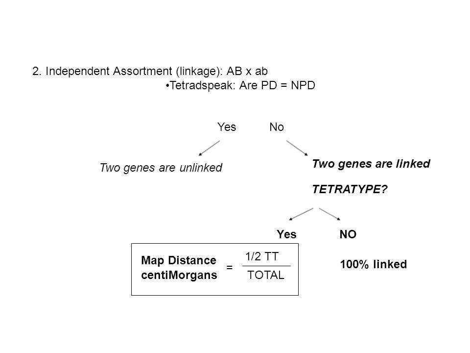2. Independent Assortment (linkage): AB x ab Tetradspeak: Are PD = NPD Yes No Two genes are unlinked Two genes are linked TETRATYPE? Yes NO 100% linke