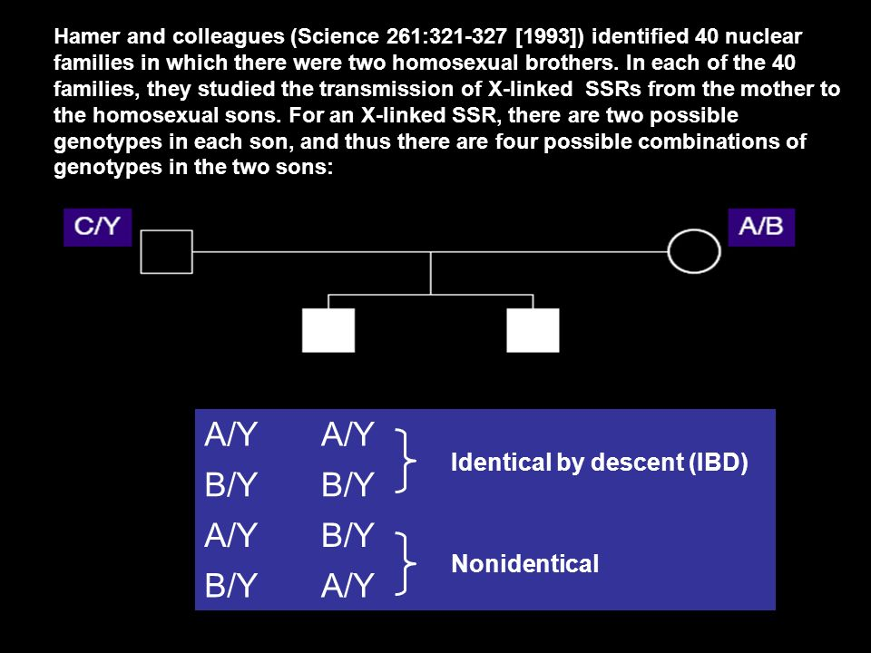 Hamer and colleagues (Science 261:321-327 [1993]) identified 40 nuclear families in which there were two homosexual brothers.