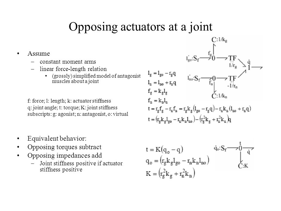 Opposing actuators at a joint Assume –constant moment arms –linear force-length relation (grossly) simplified model of antagonist muscles about a join