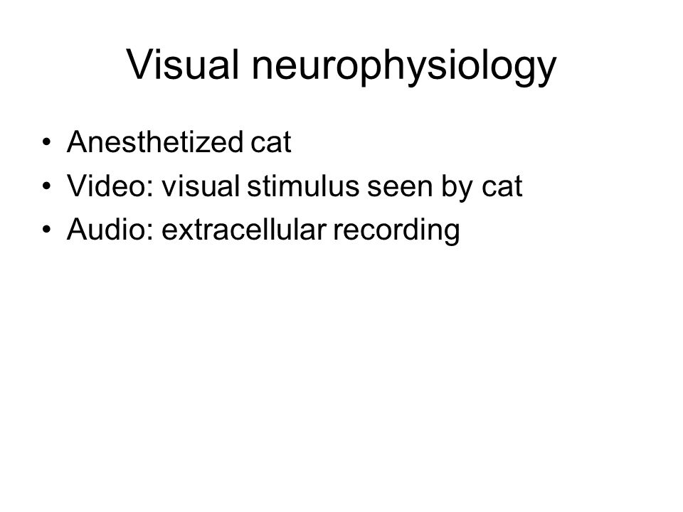 Visual neurophysiology Anesthetized cat Video: visual stimulus seen by cat Audio: extracellular recording