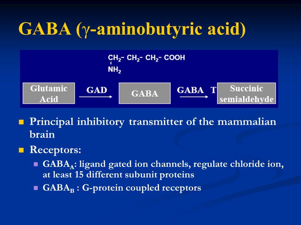 GABA (γ-aminobutyric acid) Principal inhibitory transmitter of the mammalian brain Receptors: GABA A : ligand gated ion channels, regulate chloride io