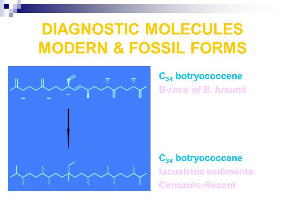 DIAGNOSTIC MOLECULES MODERN & FOSSIL FORMS C 34 botryococcene B-race of B. braunii C 34 botryococcane lacustrine sediments Cenozoic-Recent