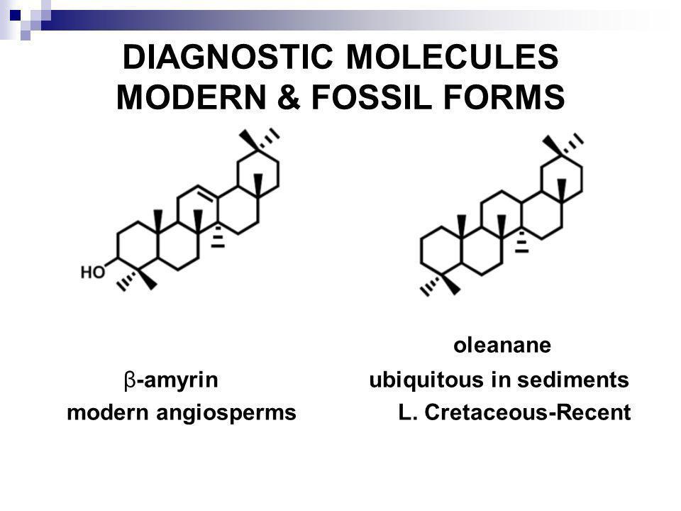 DIAGNOSTIC MOLECULES MODERN & FOSSIL FORMS oleanane β-amyrin ubiquitous in sediments modern angiosperms L. Cretaceous-Recent