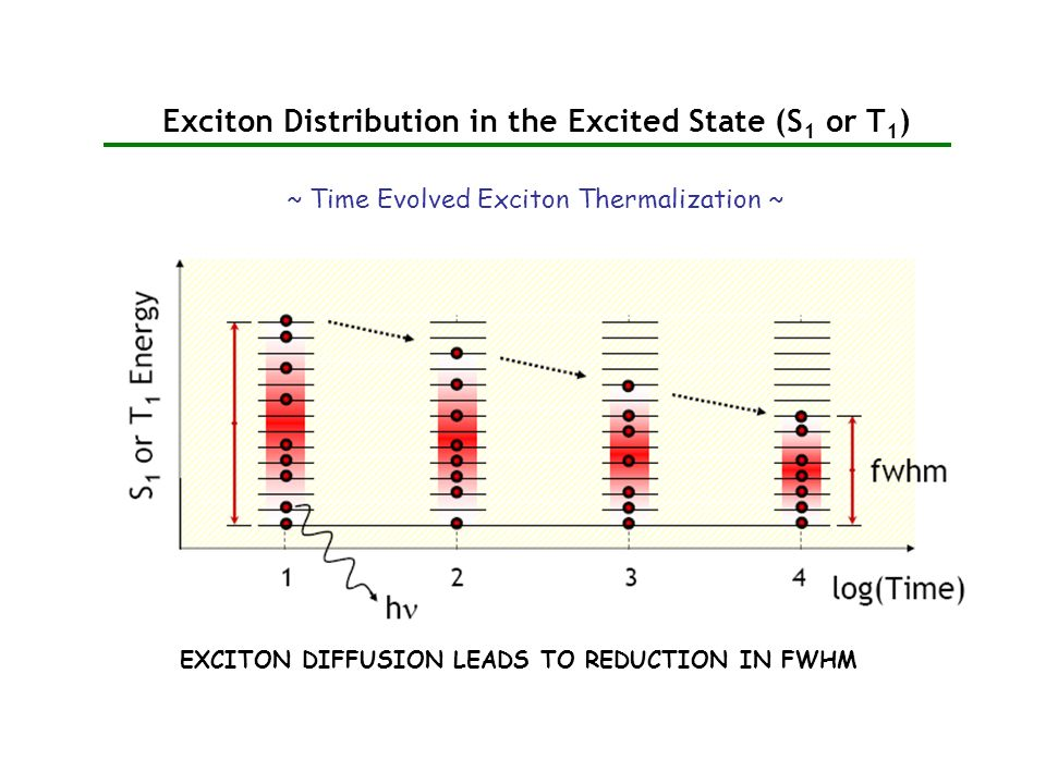 Exciton Distribution in the Excited State (S 1 or T 1 ) ~ Time Evolved Exciton Thermalization ~ EXCITON DIFFUSION LEADS TO REDUCTION IN FWHM