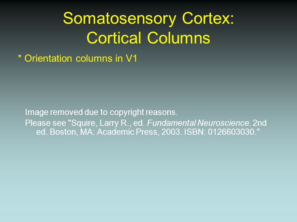 Somatosensory Cortex: Cortical Columns * Orientation columns in V1 Image removed due to copyright reasons. Please see