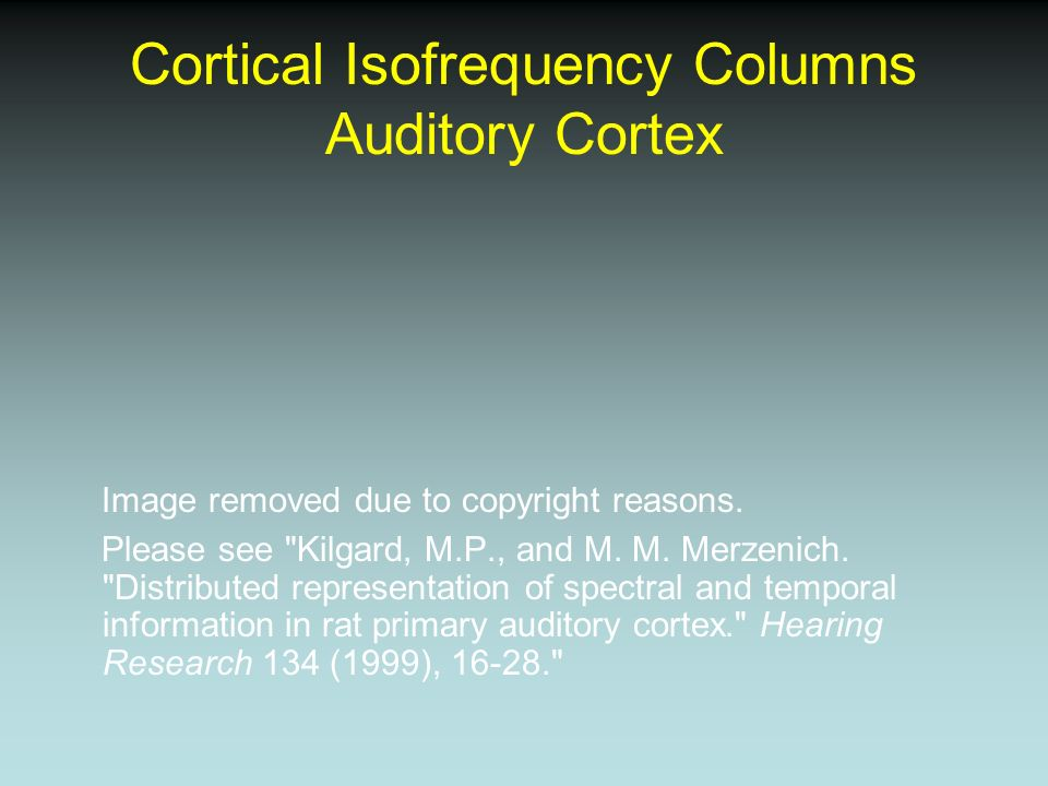 Cortical Isofrequency Columns Auditory Cortex Image removed due to copyright reasons. Please see