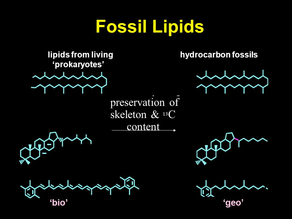 Fossil Lipids lipids from livinghydrocarbon fossils prokaryotes preservation of skeleton & 13 C content bio geo