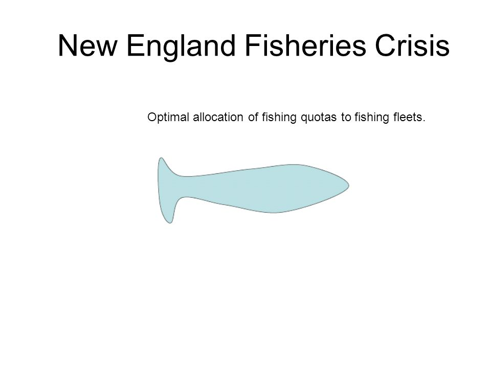 New England Fisheries Crisis Optimal allocation of fishing quotas to fishing fleets.