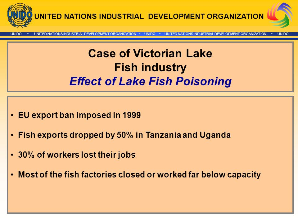 UNITED NATIONS INDUSTRIAL DEVELOPMENT ORGANIZATION UNIDO ~ UNITED NATIONS INDUSTRIAL DEVELOPMENT ORGANIZATION ~ UNIDO ~ UNITED NATIONS INDUSTRIAL DEVELOPMENT ORGANIZATION ~ UNIDO Case of Victorian Lake Fish industry Effect of Lake Fish Poisoning EU export ban imposed in 1999 Fish exports dropped by 50% in Tanzania and Uganda 30% of workers lost their jobs Most of the fish factories closed or worked far below capacity