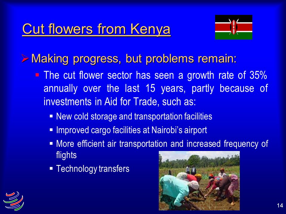14 Cut flowers from Kenya Making progress, but problems remain: Making progress, but problems remain: The cut flower sector has seen a growth rate of