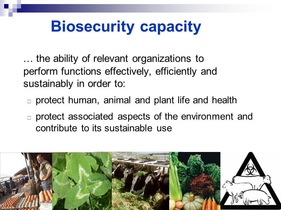 Biosecurity capacity … the ability of relevant organizations to perform functions effectively, efficiently and sustainably in order to: protect human,