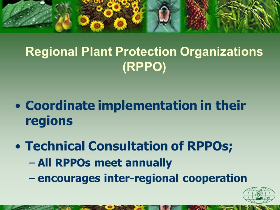 Regional Plant Protection Organizations (RPPO) Coordinate implementation in their regions Technical Consultation of RPPOs; –All RPPOs meet annually –e