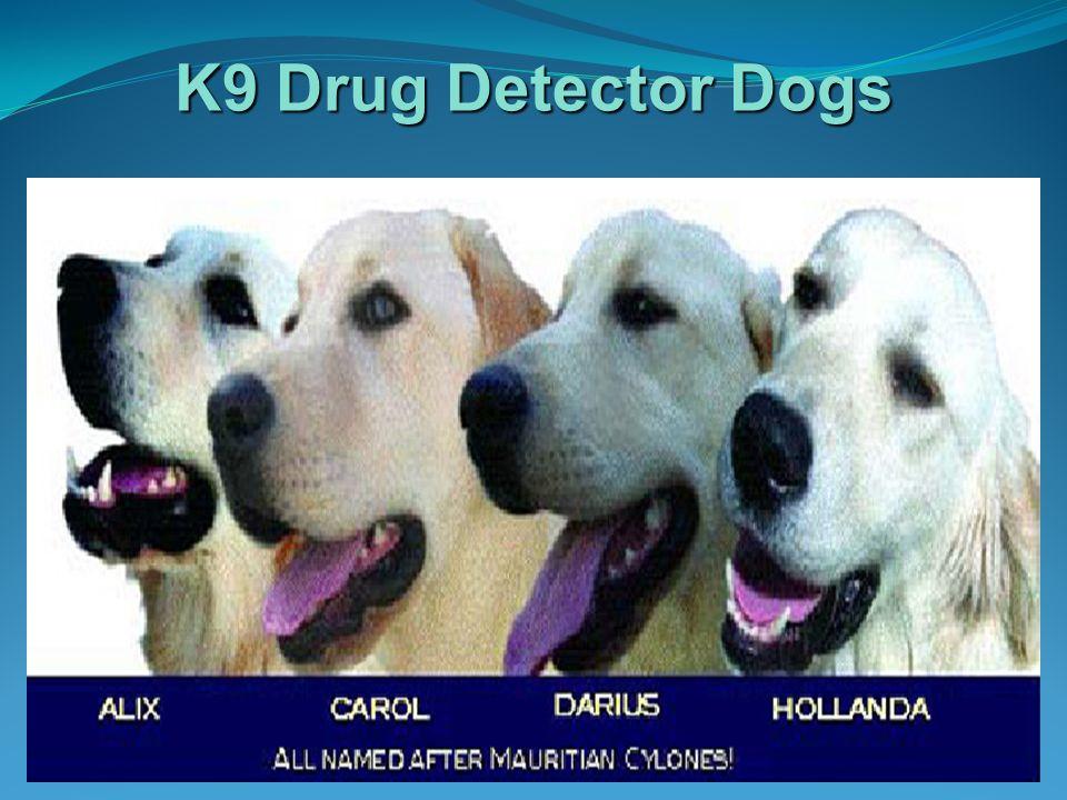 K9 Drug Detector Dogs