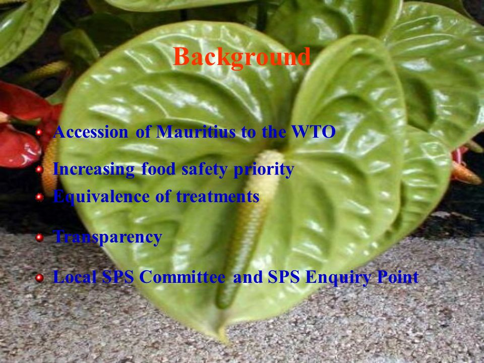 Background Accession of Mauritius to the WTO Increasing food safety priority Equivalence of treatments Transparency Local SPS Committee and SPS Enquiry Point
