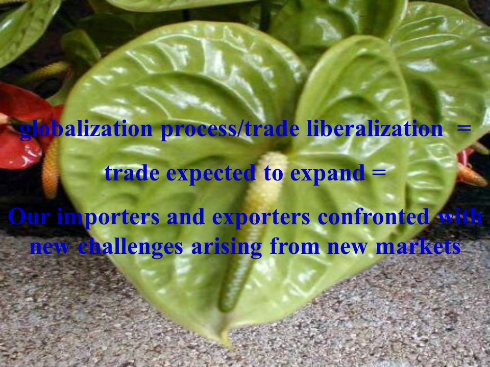 globalization process/trade liberalization = trade expected to expand = Our importers and exporters confronted with new challenges arising from new markets