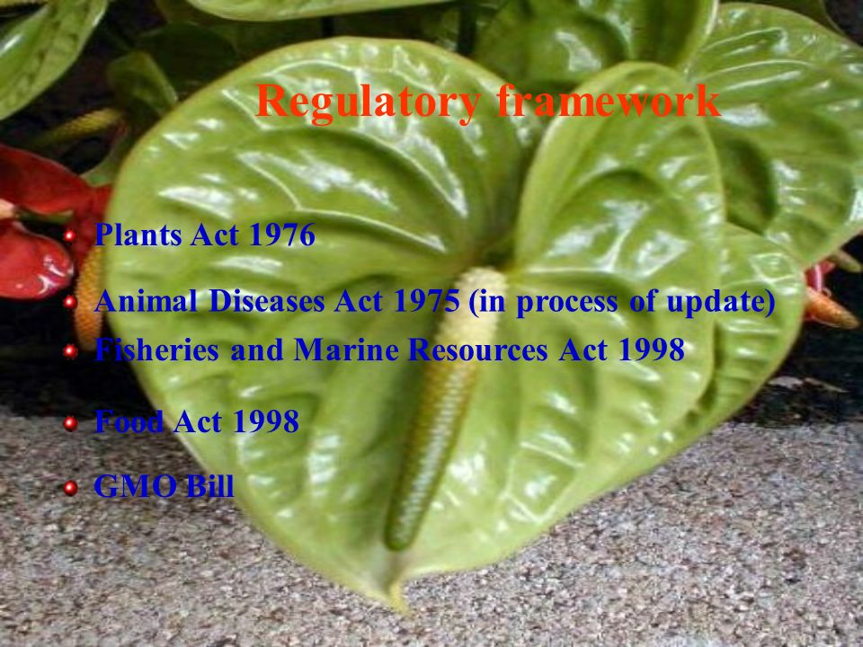 Regulatory framework Plants Act 1976 Animal Diseases Act 1975 (in process of update) Fisheries and Marine Resources Act 1998 Food Act 1998 GMO Bill
