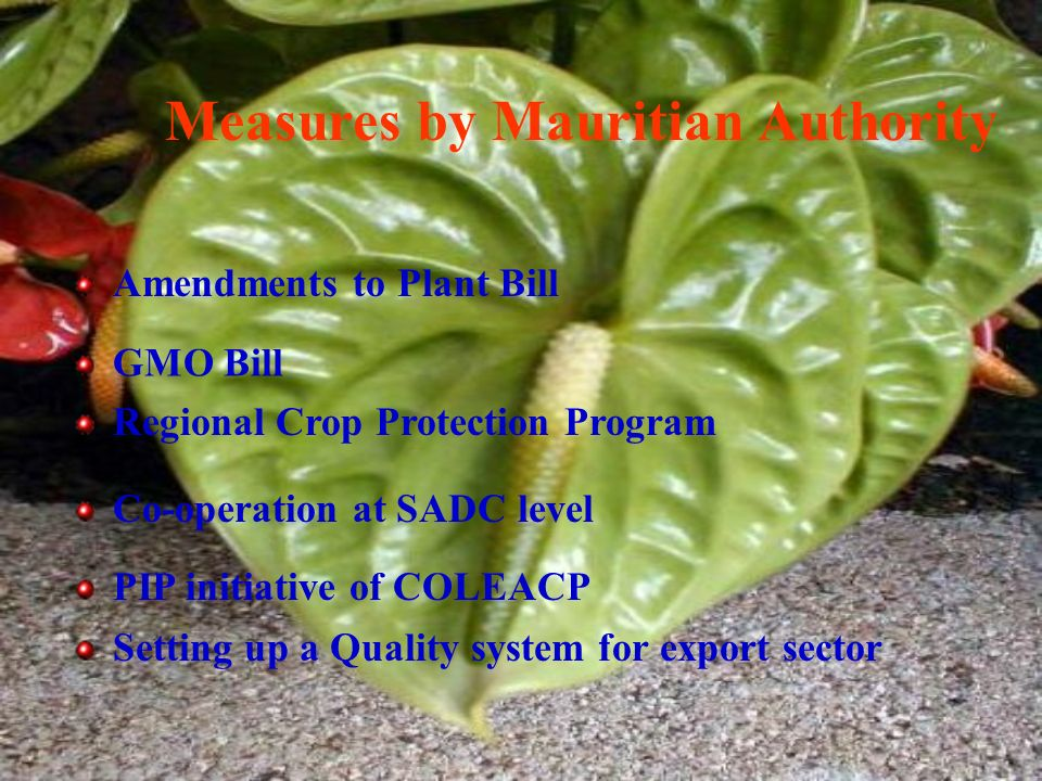 Measures by Mauritian Authority Amendments to Plant Bill GMO Bill Regional Crop Protection Program Co-operation at SADC level PIP initiative of COLEACP Setting up a Quality system for export sector