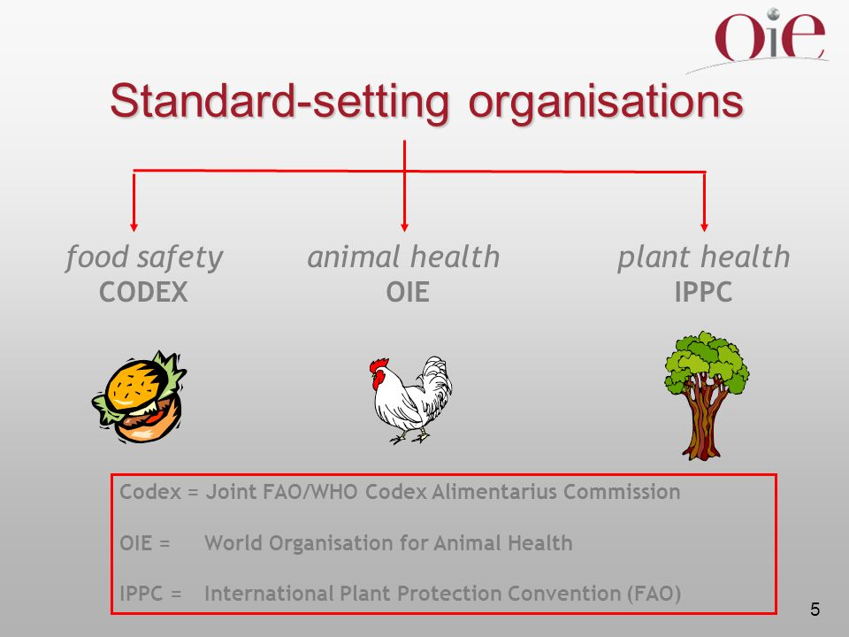 5 Codex = Joint FAO/WHO Codex Alimentarius Commission OIE = World Organisation for Animal Health IPPC = International Plant Protection Convention (FAO) Standard-setting organisations food safety CODEX animal health OIE plant health IPPC