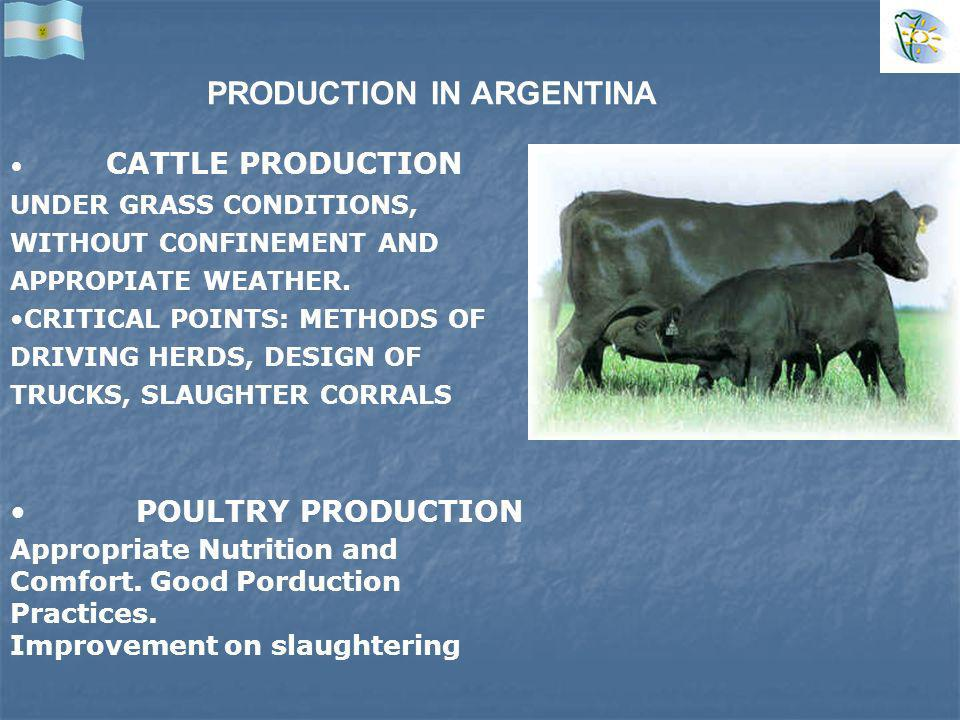 PRODUCTION IN ARGENTINA CATTLE PRODUCTION UNDER GRASS CONDITIONS, WITHOUT CONFINEMENT AND APPROPIATE WEATHER.