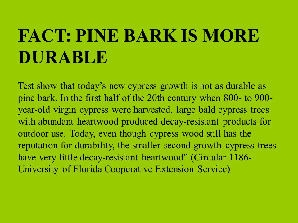 FACT: PINE BARK IS MORE DURABLE Test show that todays new cypress growth is not as durable as pine bark. In the first half of the 20th century when 80