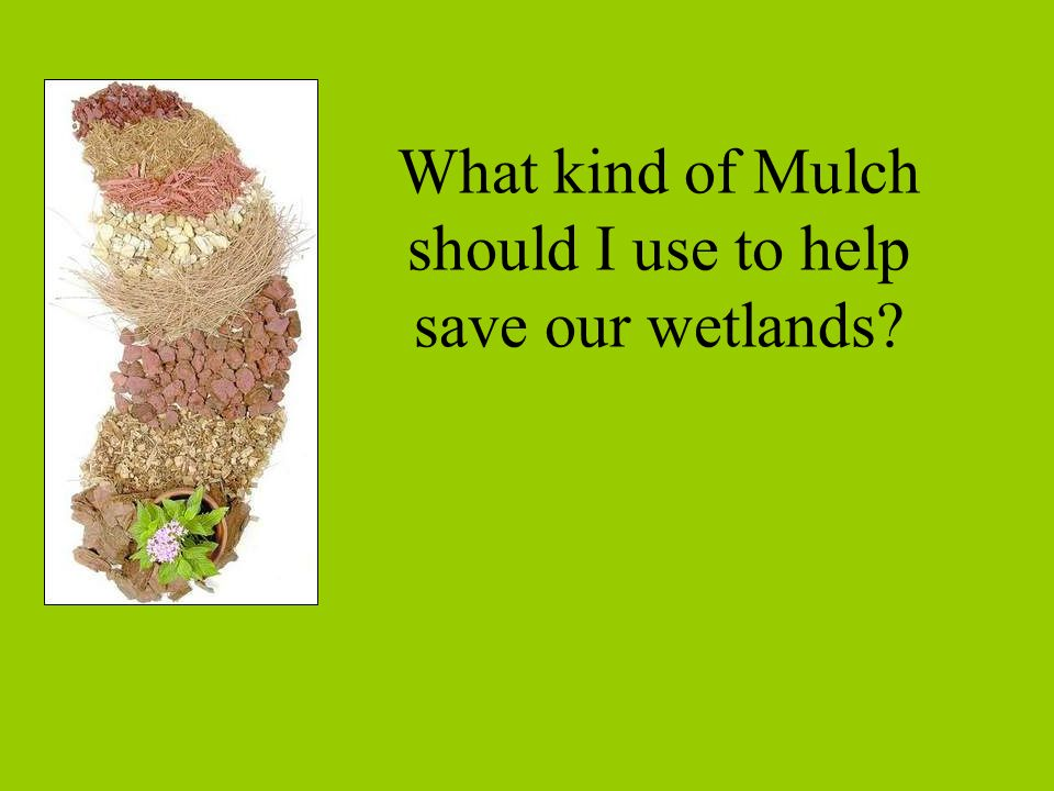 What kind of Mulch should I use to help save our wetlands?