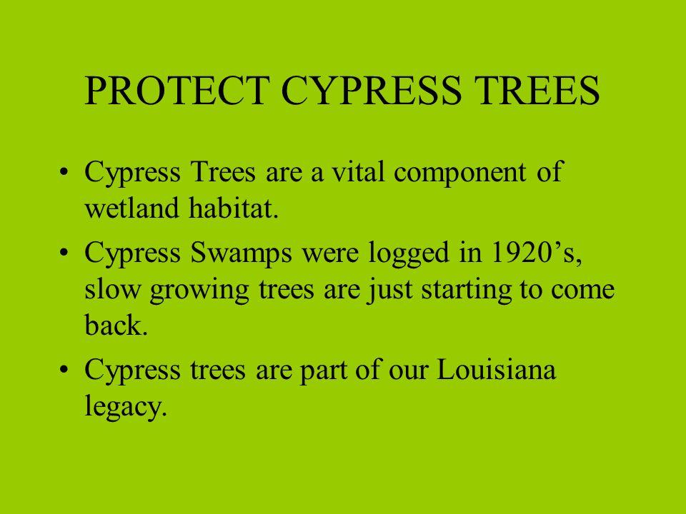 Myth #4 CYPRESS IS MORE WEED RESISTANT