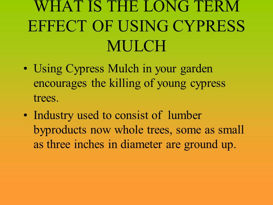 WHAT IS THE LONG TERM EFFECT OF USING CYPRESS MULCH Using Cypress Mulch in your garden encourages the killing of young cypress trees. Industry used to