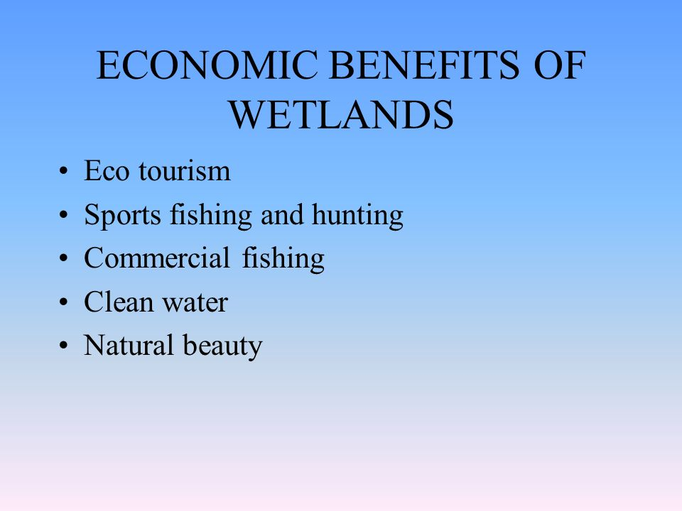 ECONOMIC BENEFITS OF WETLANDS Eco tourism Sports fishing and hunting Commercial fishing Clean water Natural beauty