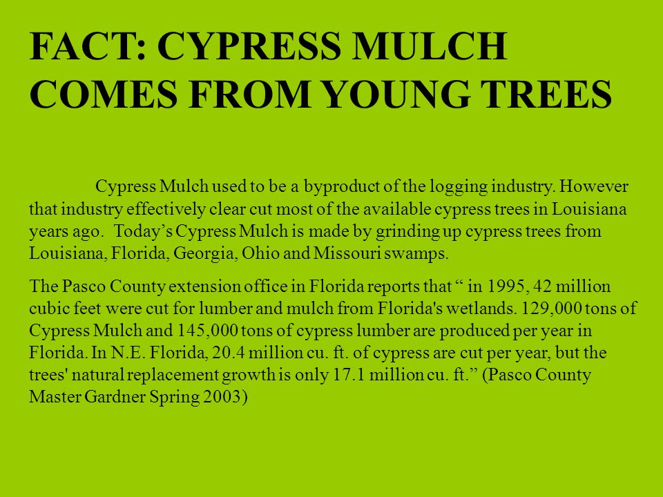 MYTH #2 CYPRESS MULCH IS INSECT RESISTANT