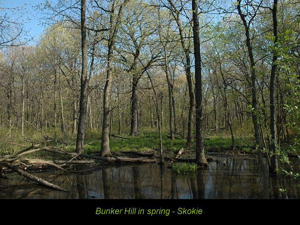 Bunker Hill in spring - Skokie