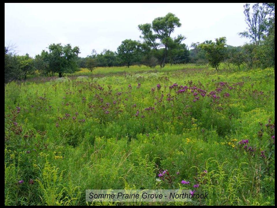 Somme Prairie Grove - Northbrook