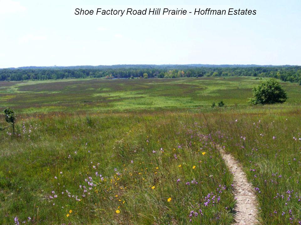 Shoe Factory Road Hill Prairie - Hoffman Estates