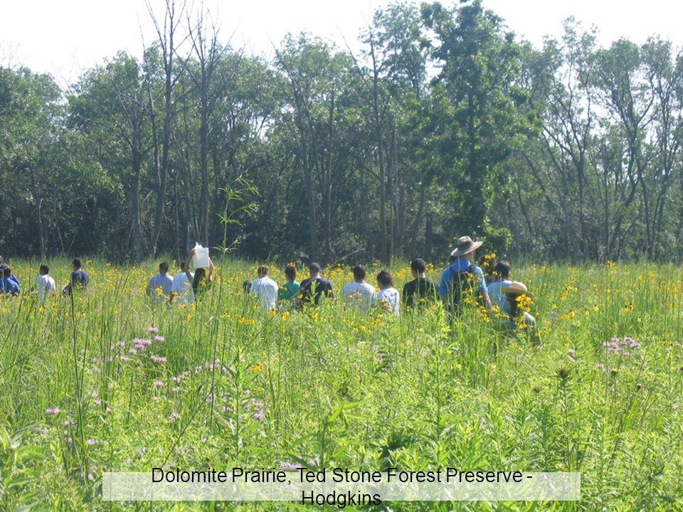 Dolomite Prairie, Ted Stone Forest Preserve - Hodgkins