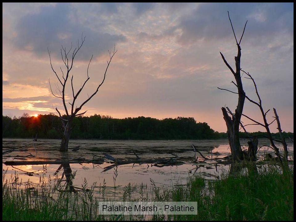 Palatine Marsh - Palatine