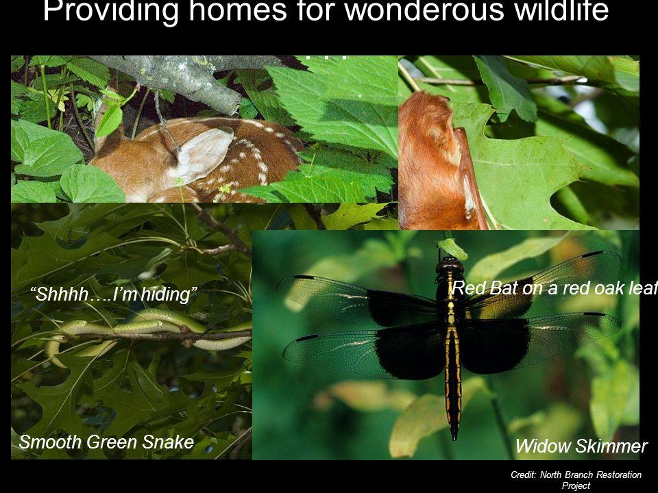 Providing homes for wonderous wildlife...