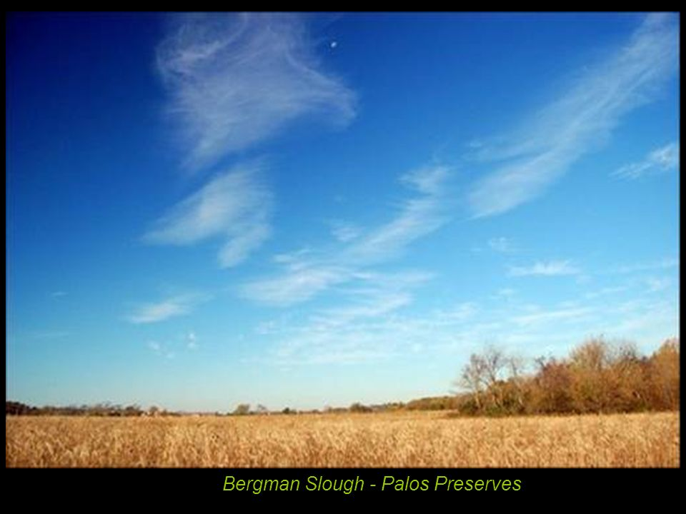 Bergman Slough - Palos Preserves