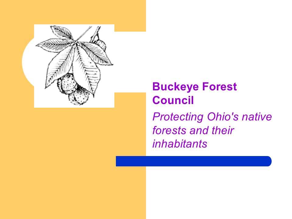 Buckeye Forest Council Protecting Ohio s native forests and their inhabitants