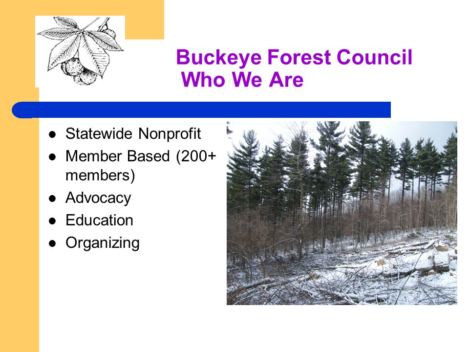 Buckeye Forest Council Who We Are Statewide Nonprofit Member Based (200+ members) Advocacy Education Organizing