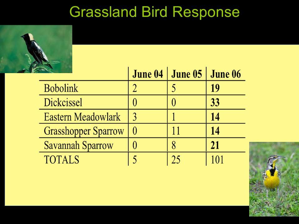 Grassland Bird Response
