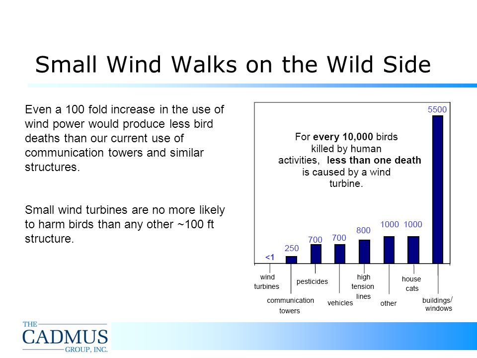 25 Small Wind Walks on the Wild Side Even a 100 fold increase in the use of wind power would produce less bird deaths than our current use of communication towers and similar structures.