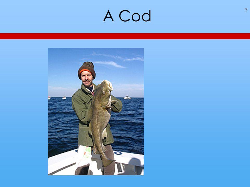 A Cod 7