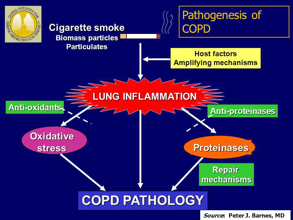 LUNG INFLAMMATION COPD PATHOLOGY Oxidativestress Proteinases Repairmechanisms Anti-proteinases Anti-oxidants Host factors Amplifying mechanisms Cigare